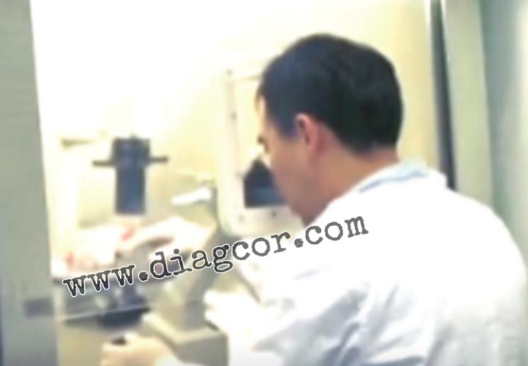 达雅高:香港验血和Y染色体的关系,其实很亲密