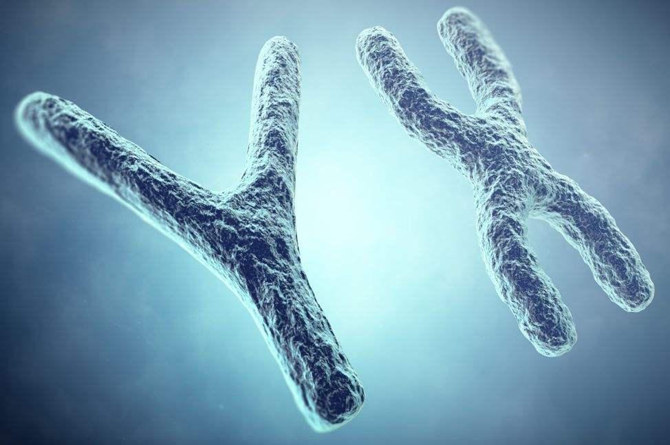 达雅高:香港Y染色体检测,绝对的安全无创且准确度高